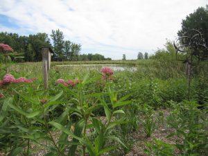 Lake Elmo: Planting for Clean Water - Wonderful Wetlands workshop