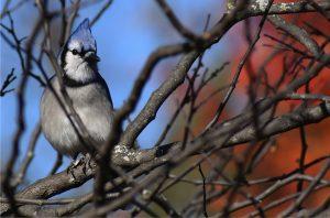 Minnesota Bird Hike