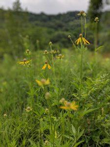 Revitalize a Native Oak Savanna Remnant
