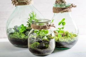 CANCELED - Planting Mini Terrariums
