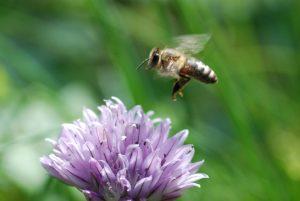 The Art of Beekeeping