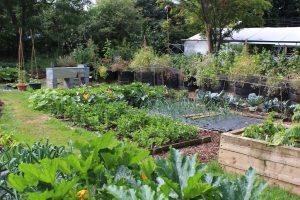 Easy Vegetable Garden Design
