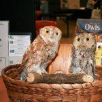 Stan Tekiela presents: Intriguing Owls