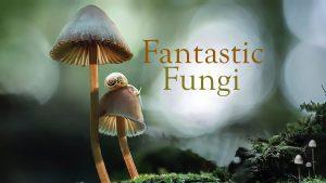 Film @ Franconia: Fantastic Fungi and Fly Amanita