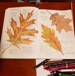 Nature Journaling Seminar