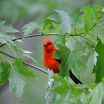 Bird Hike at Big Marine Park Reserve