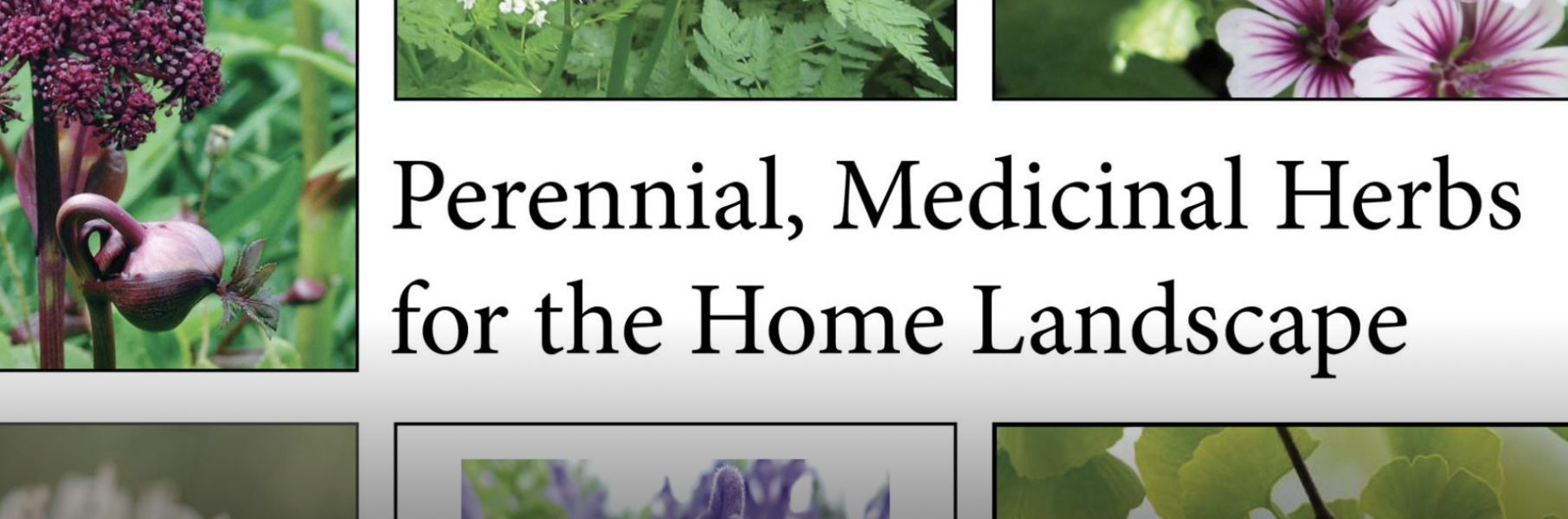 Perennial and Medicinal Herb Gardens for the Home ...