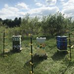 Art Classes @ Franconia Commons: Birdhouses, Batboxes, and Beeboxes