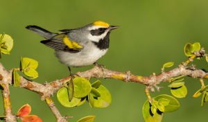 Bird Migration from the St. Croix Valley to Costa Rica
