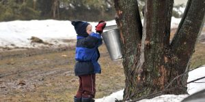 Maple Syruping Open House