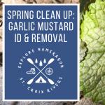 Spring Clean Up: Garlic Mustard ID & Removal