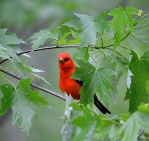 Bird Hike at St. Croix Bluffs Regional Park